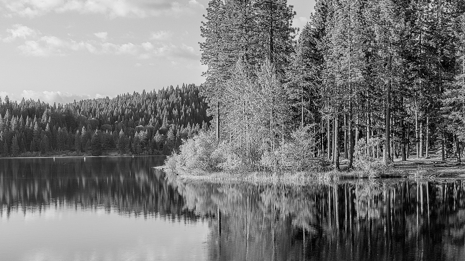 Lake Siskiyou California Detail. High Res California Fine Art Print.