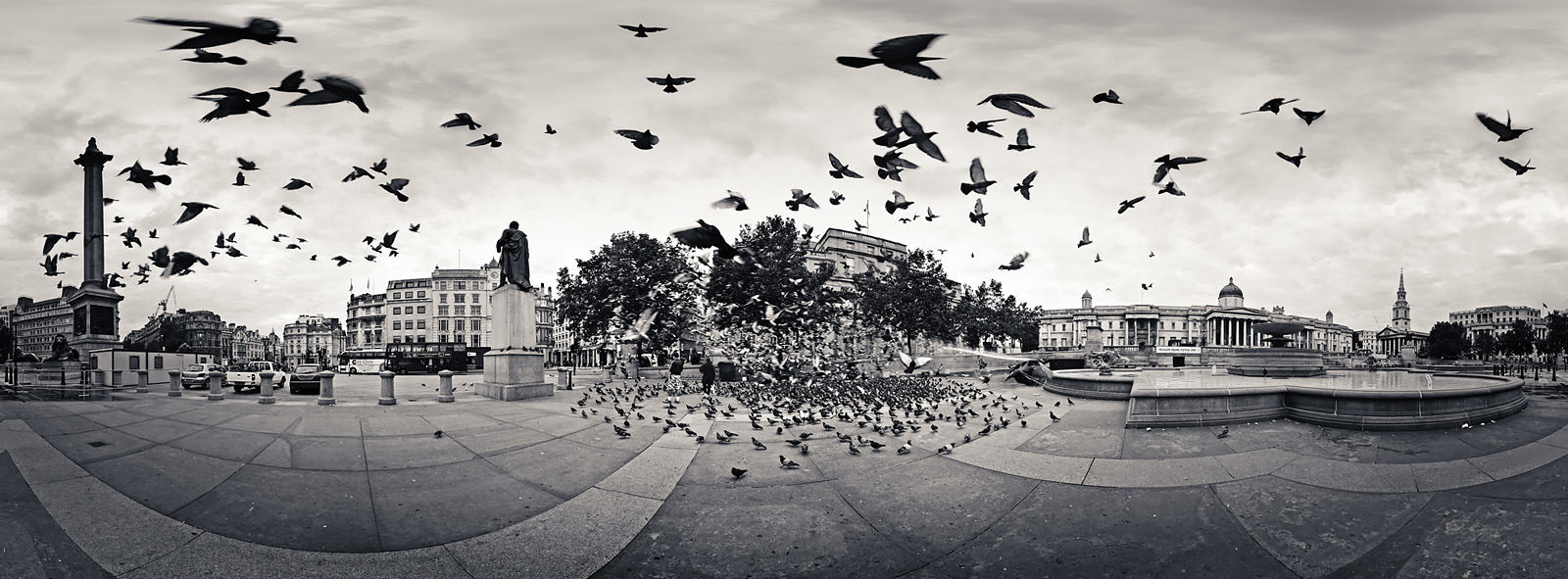 The Birds Acrylic - London Black & White Fine Art Photo