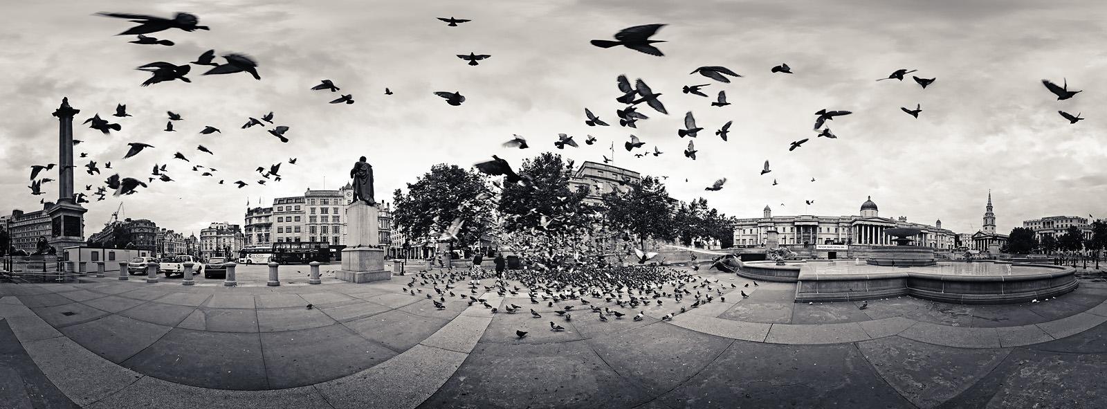 The Birds Acrylic - London Black & White Fine Art Photo