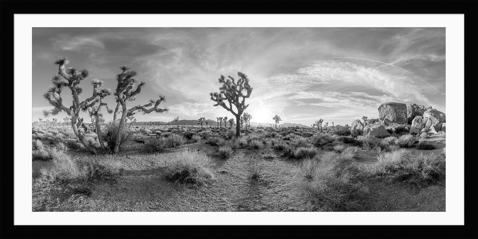 Joshua Tree - California Black & White Fine Art Photograph