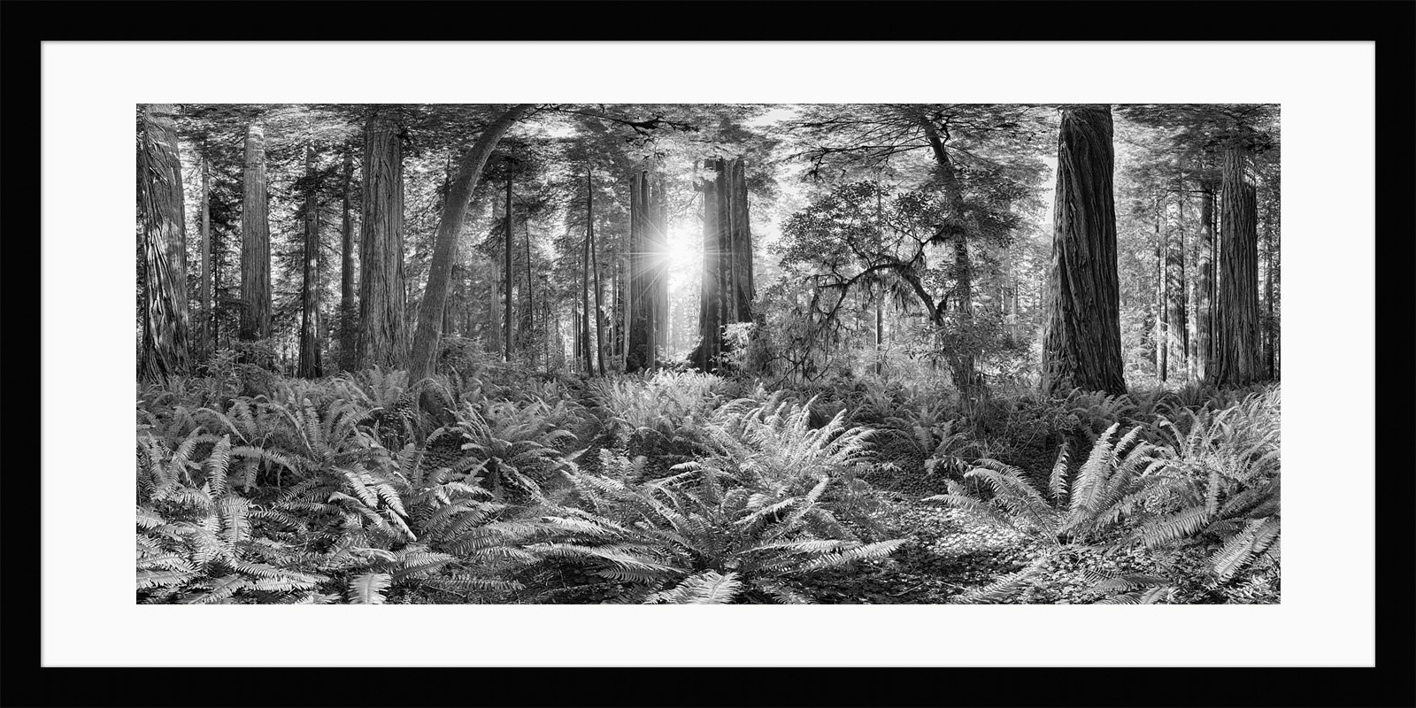 Redwoods - Framed California Black & White Fine Art Photograph